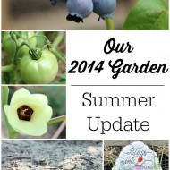 Our 2014 Garden: Summer Update