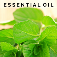10 Uses for Peppermint Essential Oil