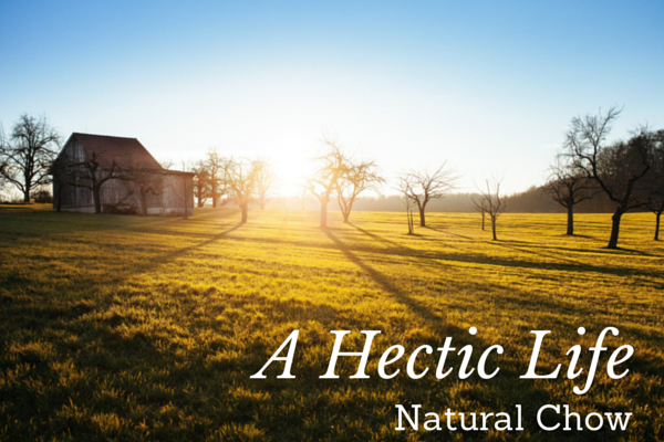 A Hectic Life | Natural Chow